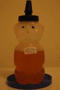 honey bear photographed in artificial light